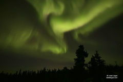 Alaska, fairbanks, aurora, northern lights