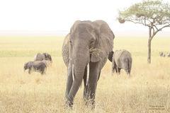 Los Elefantes en la Neblina