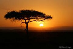 Acacia Sunset - 02