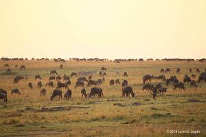 Ah Africa