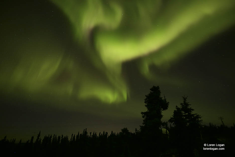 Curtains of Aurora Borealis streaming from the sky, moving, swirling. Northern lightsglowing, embracing the trees.