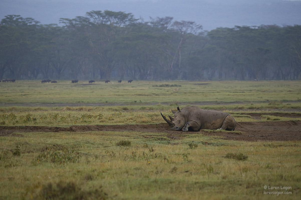 Rhinoceros, photo