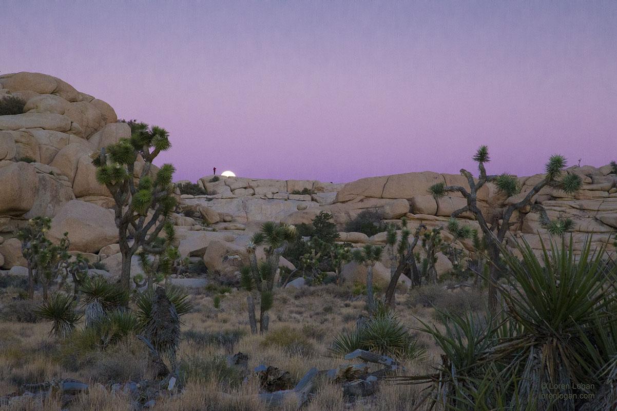 Joshua Tree, National Park, moon, rock., photo